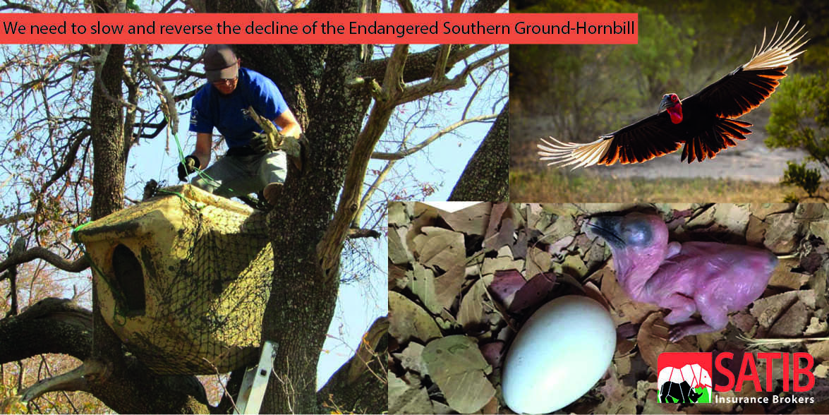 facebook image for the hornbill project2